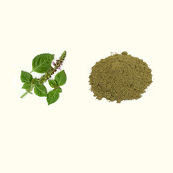 Tulsi Extract, Pack Size: 25 Kg