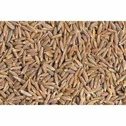 Cumin Seeds in Delhi, Cumin Beej Dealers & Suppliers in Delhi