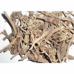 Organic Akarkara Root