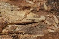 Residential & Commercial Monthly Termite Control In Jaipur