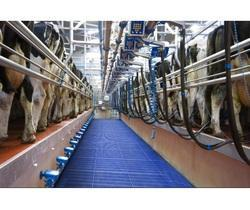 Auto Wash System for Milking Parlor - Cubicles