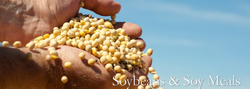 Soybeans & Soy Meals