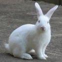 Broiler Rabbit Feed