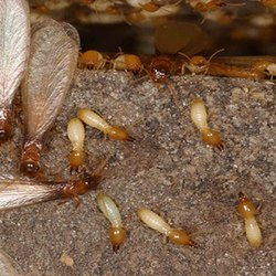 Commercial Anti Termite Soil Treatment