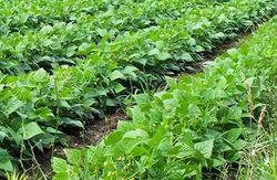 On Farm Input Management Service