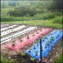 Mulch Plastic