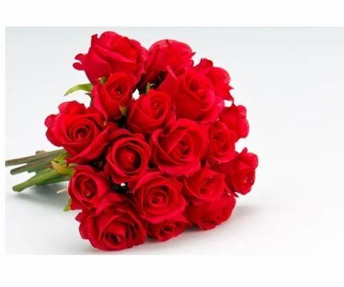 rose flower at rs 400 /kilogram | rose flower | id: 14510711788
