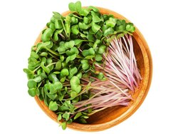 A Grade Radish Microgreens, Packaging Type: Box, Packaging Size: 1Kg
