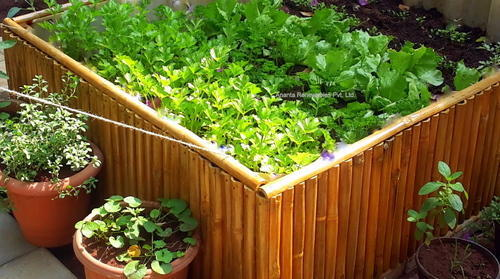 Organic Kitchen Gardening Services in
