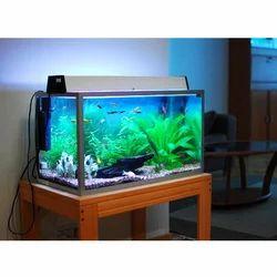 freshwater aquarium tank at rs 10000 piece machhlighar ki tanki