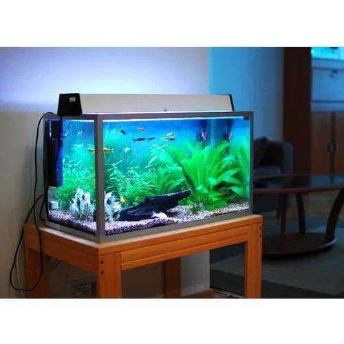 Fische & Aquarien Aquarium