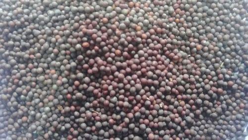 PR Dried Mustard Seed, Packaging: PP Bag