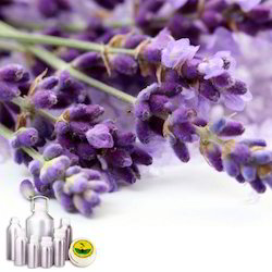 Lavender(True French) Oil Certified Organic