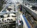 Desi Cow Parlor