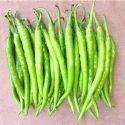 Green Chilli Seeds HYB- 37