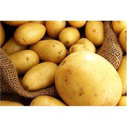 Potato - Wholesale Price & Mandi Rate for Potatoes