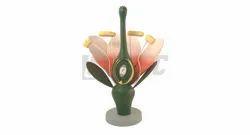 Dicot Flower