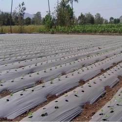 Mulch Film Manufacturer and Supplier in Tamil Nadu