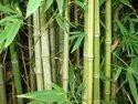 Bamboo Grass Tree