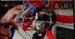 FAN Repair Service, Warranty: 3 Month