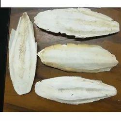 Cuttle Fish Bone 8 - 12