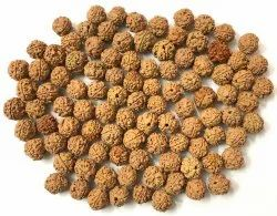 Brown Round 3 Mukhi Rudraksha, Packaging Type: Box