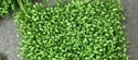 Plastic Artificial Wall Grass