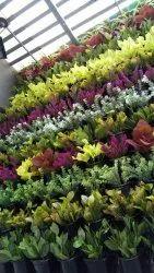 Potted Vertical Garden
