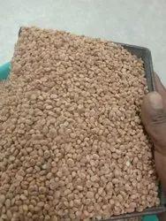 Buchanania Lanzan Seed