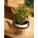 White Feng Shui Flower Pot