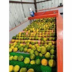 Semi Automatic Orange Grading Machine