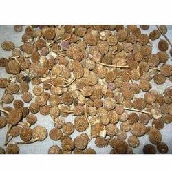 Etti Kottai Seeds