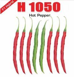 Samriddhi H1050 Hot Pepper Seed