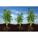 Agricultural Bio Fertilizer