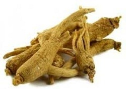 American Ginseng Extract