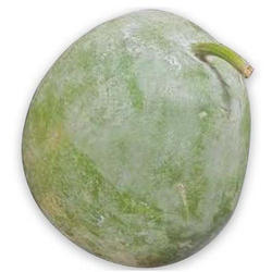 Fresh Ash Gourd, Packaging: Mesh Bag