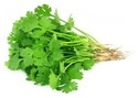 Coriander Vegetable Leaf