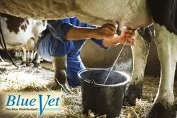 Mastitis Prevention for Cows