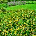 Landscape Gardening Service