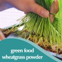 Wheatgrass Powder Wheat-O-Power - Blood Sugar Management & Blood Purifier