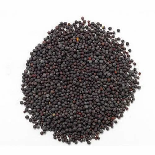 Dharti Premium Quality Black Mustard Seeds, Packaging Type: Plastic Bag