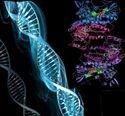 Male Genomics & Proteomics