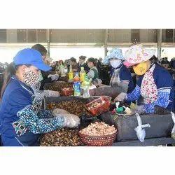 Cashew Trained Labour Service