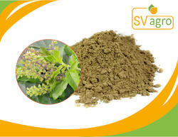 Ocimum Sanctum / Tulsi/ Holy Basil Extract, Packaging Type: PP Polybags,HDPE Drums