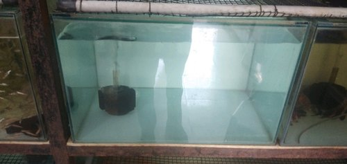 Wholesale Trader of Aquarium Fish Tank & Fish Seeds by Amir