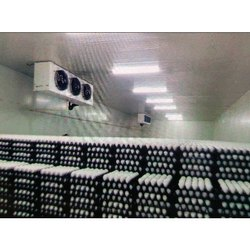 Eggs Cold Storage