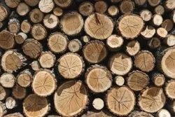 8 Feet Round Silver Wood Timber Logs, For Construction, Thickness: 18-60