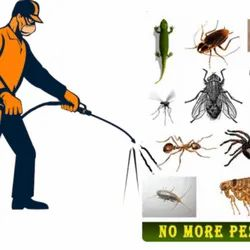 Commercial Spray Insects Pest Control Service