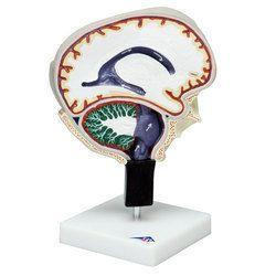 Cerebrospinal Fluid Circulation
