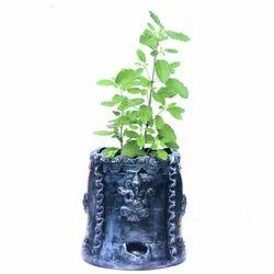 Divine Tulsi Plant Holder